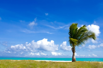 Single - palm tree on the beach