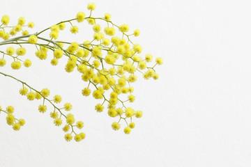 rametto di mimosa