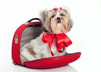 Furry dog in a bag