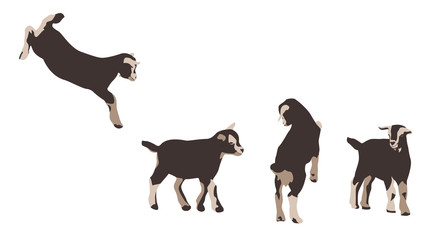 baby goats - design elements