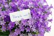 Verzeih mir! in lila Blumen