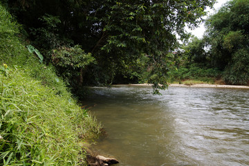 The rivers Borneo.