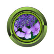 hortensia jardin jardinage plante plantation printemps bouton