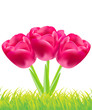 Three red tulips flowers background,vector