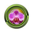 orchidée jardin jardinage plante plantation printemps bouton