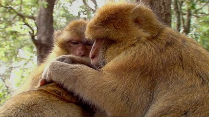 Scimmie - Famiglia - Slow-motion