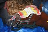 Naklejka Pferd unter Narkose