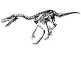 dinosaur skeleton raptor poster