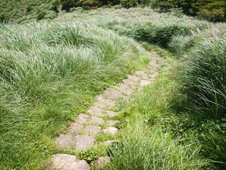 trail running through grassy hills