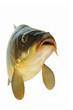 Fische 4