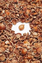 Pile of cracked hazelnut shells surrounding whole kernel