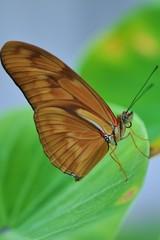 Brauner Schmetterling auf grünem Blatt