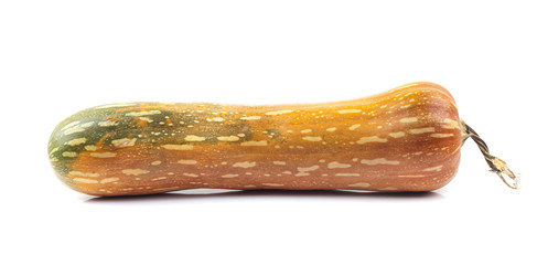 Zucca lunga
