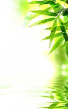 Zen design bambou. Avec copie-espace.