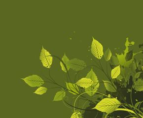 Grüne Blätter Zweige kontrastreich