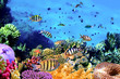 Beautiful Corals and Fish