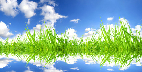 Fresh grass with perfect sky background