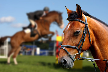 Portrait of brown horse during show jumping race