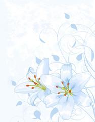 Lilly on light blue background