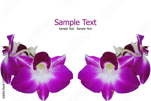 Purple orchid isolate on the white. in Thailand.