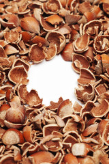 cracked hazelnut shells with blank copy space in the center