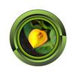 arum jardin jardinage plante plantation printemps bouton fleur