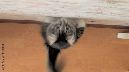 Jump of a cat from height