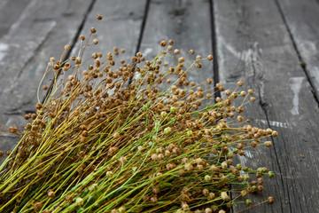 Ripe flax