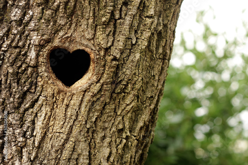 Heart-shaped bird nest in hollow trunk