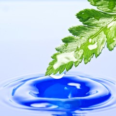 Fresh green leaf reflected in rendered water