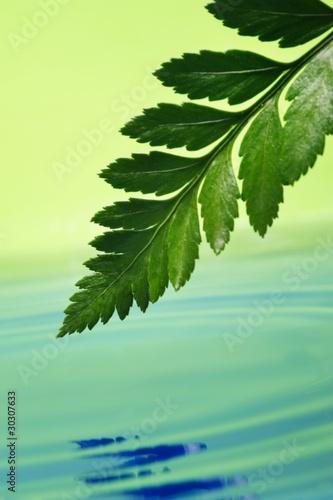 swiezy-zielony-lisc-odzwierciedlenie-w-swiadczonych-wody