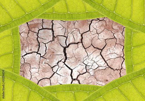 Dry terrain ground in leaf frame