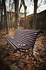 Wood bench covered with brown leaves