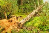 Baum nach Sturm - tree after storm 01 poster
