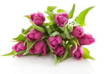 Bouquet of purple Dutch tulips over white background