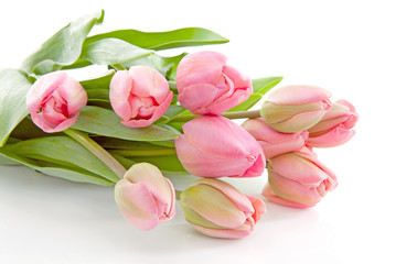 Bouquet of pink Dutch tulips over white background