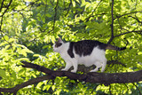 tomcat on the tree poster