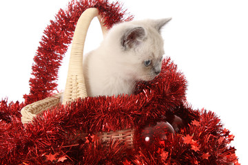 kitten with red New Year's toys.