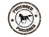 Purebred horse stamp poster
