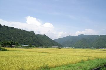 田園風景 田んぼ 畑 米 稲作