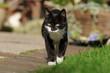 Laufende schwarze Katze