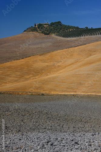Crete Senesi, Siena: landscape of hills with fields of grain.