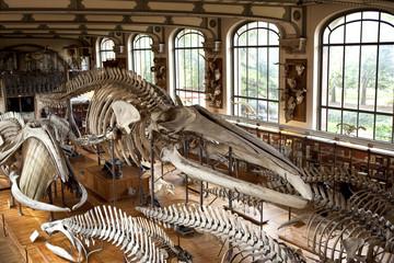 musée museum histoire naturelle paris préhistoire os squelette