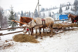 Horses and sledge in winter