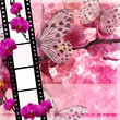 Butterflies and orchids flowers  pink background  with film fram