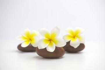 Spa flowers on brown massage stones
