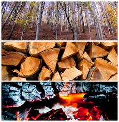 collage bosco legna fuoco
