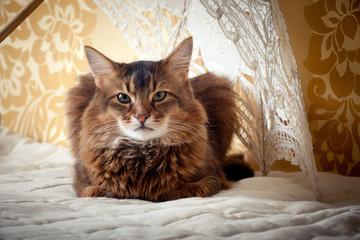 Rudy somali cat portrait on vintage background