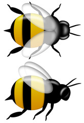 Bumble Bee Top and Side View Isolated on White