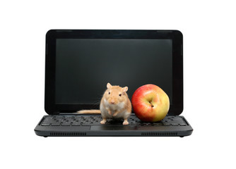Mouse And Apple On Laptop